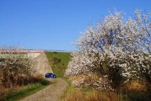 Wiosna w gminie Brody
