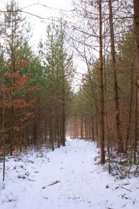 Zaśnieżone krajobrazy