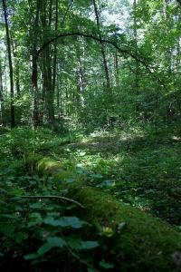 Rezerwaty, pomniki przyrody