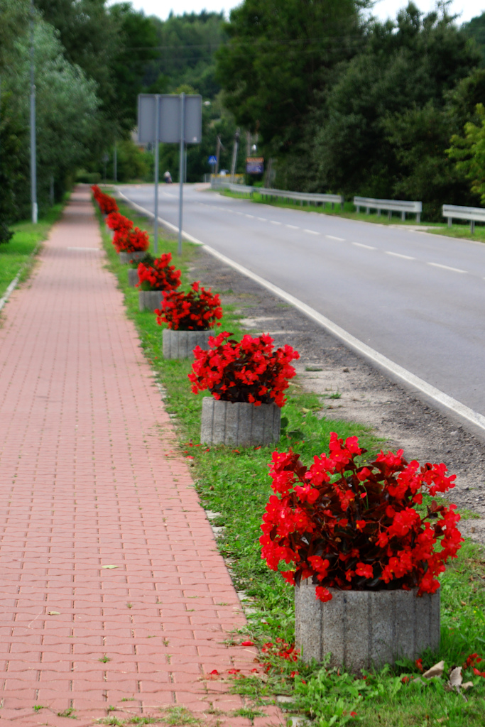 kwiaty-ozdoby-gazony-radomska.JPG